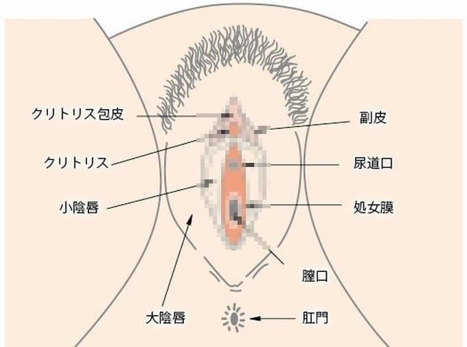 マンコの構造