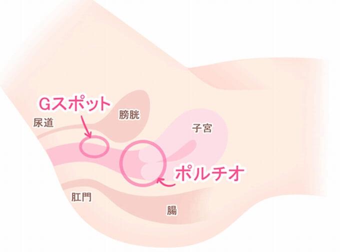 ポルチオ性感帯